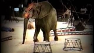 Трагедия в цирке! Слон напал на человека!