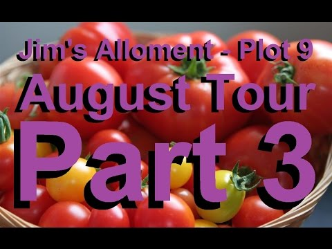 Jim's Allotment - Plot 9 - August Tour Part 3 - Espalier trees, Tomatoes, Spinach and Comments