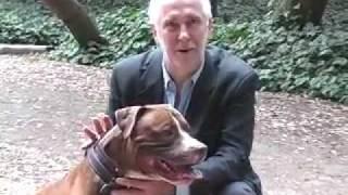 Dog Training - Distance Sits Explained
