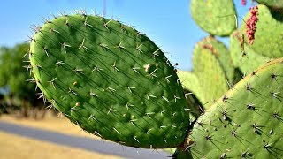 How cactus plant in jungle looks like ?