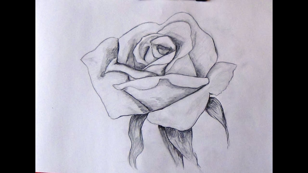 How To Sketch A Rose Step By Step Tutorial For Beginners