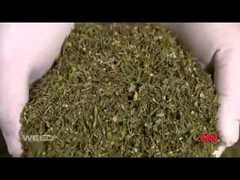 CNN Marihuana