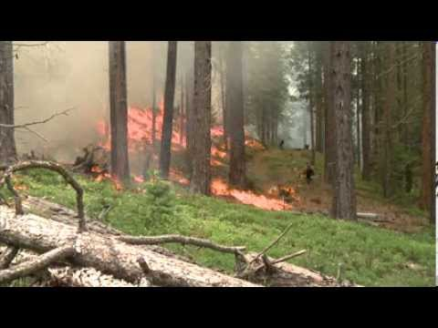 Fire Behavior and Ecological Restoration
