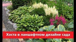 видео Хосты в ландшафтном дизайне, выращивание и уход