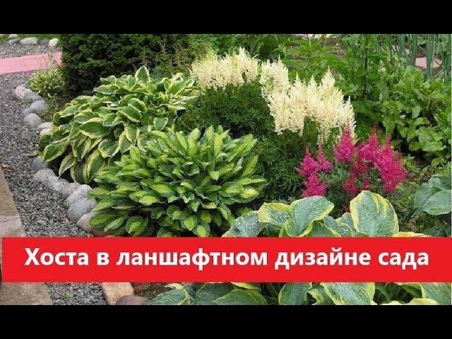 <b>Сад</b> и Огород   - YouTube