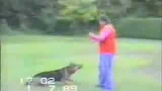 Собака с большой буквы.flv