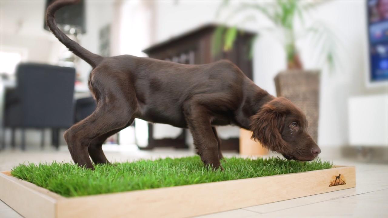 Carnilo - Das Erste Hundeklo Aus Echtem Rasen