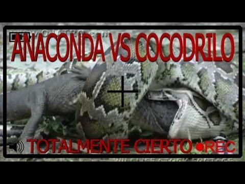 Giant Anaconda vs Giant Crocodile