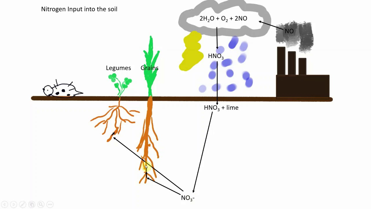 hight resolution of soil nitrogen cycle