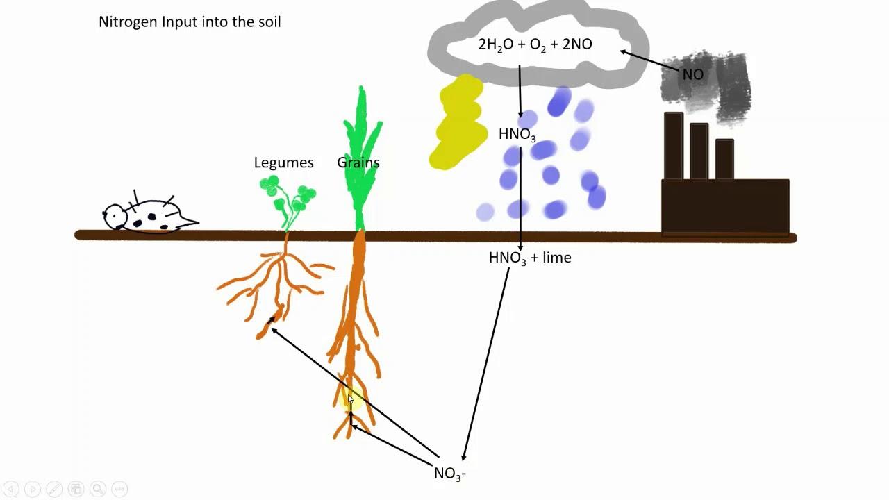 medium resolution of soil nitrogen cycle