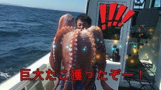 たこ漁(さばき方・ゆで方・食べ方)Octopus㊵ thumbnail