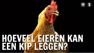 Hoeveel eieren kan een kip leggen?   De Buitendienst over de kip en het ei