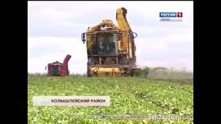 В Пензенской области начата уборка сахарной свеклы
