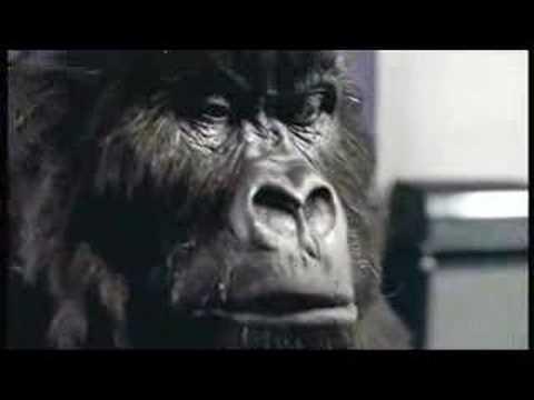 Cadbury's Gorilla Advert Aug 31st 2007