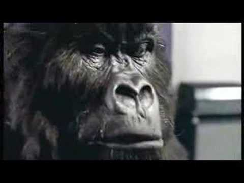 Cadbury's Gorilla Advert Aug 31st 2007