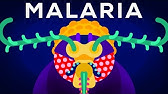Genetic Engineering and Diseases – Gene Drive &amp Malaria