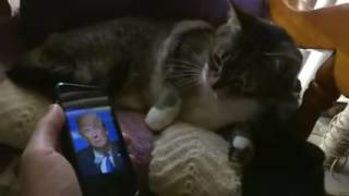 Watch Cat react to TRUMP's picture....lol