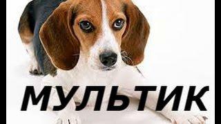 """Новый мультфильм для детей """"Сказка про сторожевого пса и охотничью собаку"""""""