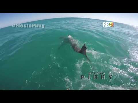 Efecto Pirry - Episodio 11 por Canal Red+