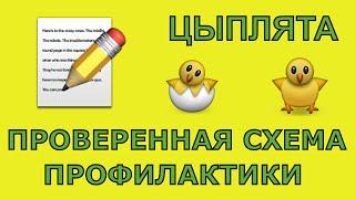 Цыпляткам 4 дня: схема профилактики