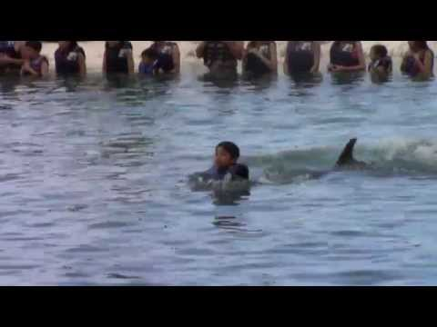Swimming With Dolphins at Sea Life Park Hawaii