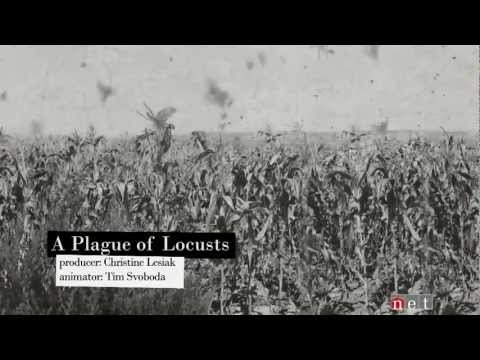 A Plague of Locusts | Nebraska Stories
