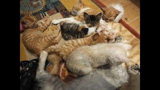 恐怖の夕食タイム!野良猫多頭飼育崩壊現場から中継!猫に生活を奪われる!