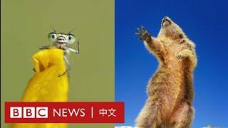野生動物搞笑攝影獎 你最喜歡哪一張?- BBC News 中文