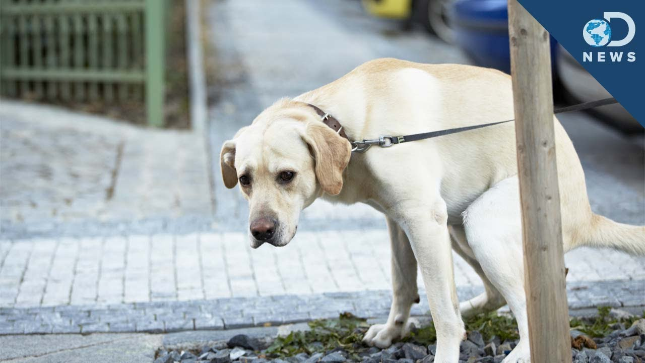 Why Dogs Spin Before They Poop
