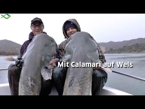 Top-Welsköder | Mit Tintenfisch auf große Waller [HD]