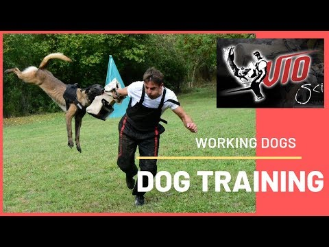 DOG TRAINING WITH WORKING DOGS FOR SCHUTZHUND !!!!