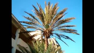 Агадир Agadir Марокко ClubHotel Riu Tikida Dunas Фото(Агадир (Agadir) Марокко ClubHotel Riu Tikida Dunas., 2015-12-31T05:07:23.000Z)