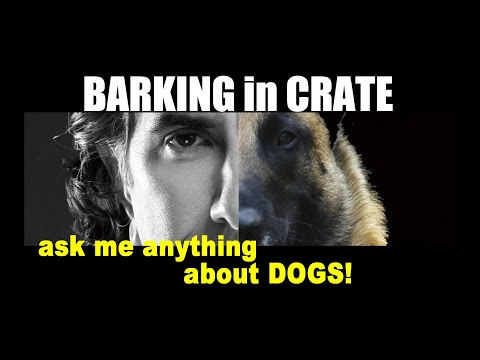 Puppy is SUDDENLY Barking in Crate - ask me anything - Dog Puppy Training Video