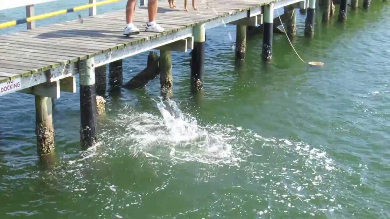 Nice snook caught off a private pier in bokeelia youtube for Bokeelia fishing pier