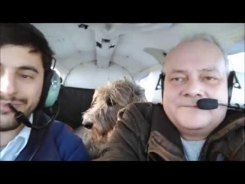Irish Wolfhound flying Dragon 1