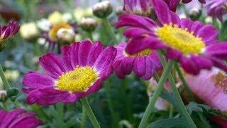 春 お花がいっぱい 花の画像