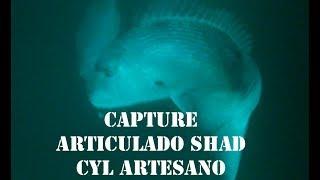 ARTICULADO SHAD CAPTURE VERTICAL ACTION