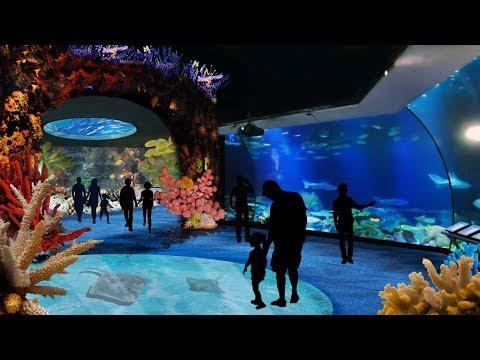 Zoo Tours Ep. 56: The Award Winning Wild Reef | Shedd Aquarium (60 FPS)