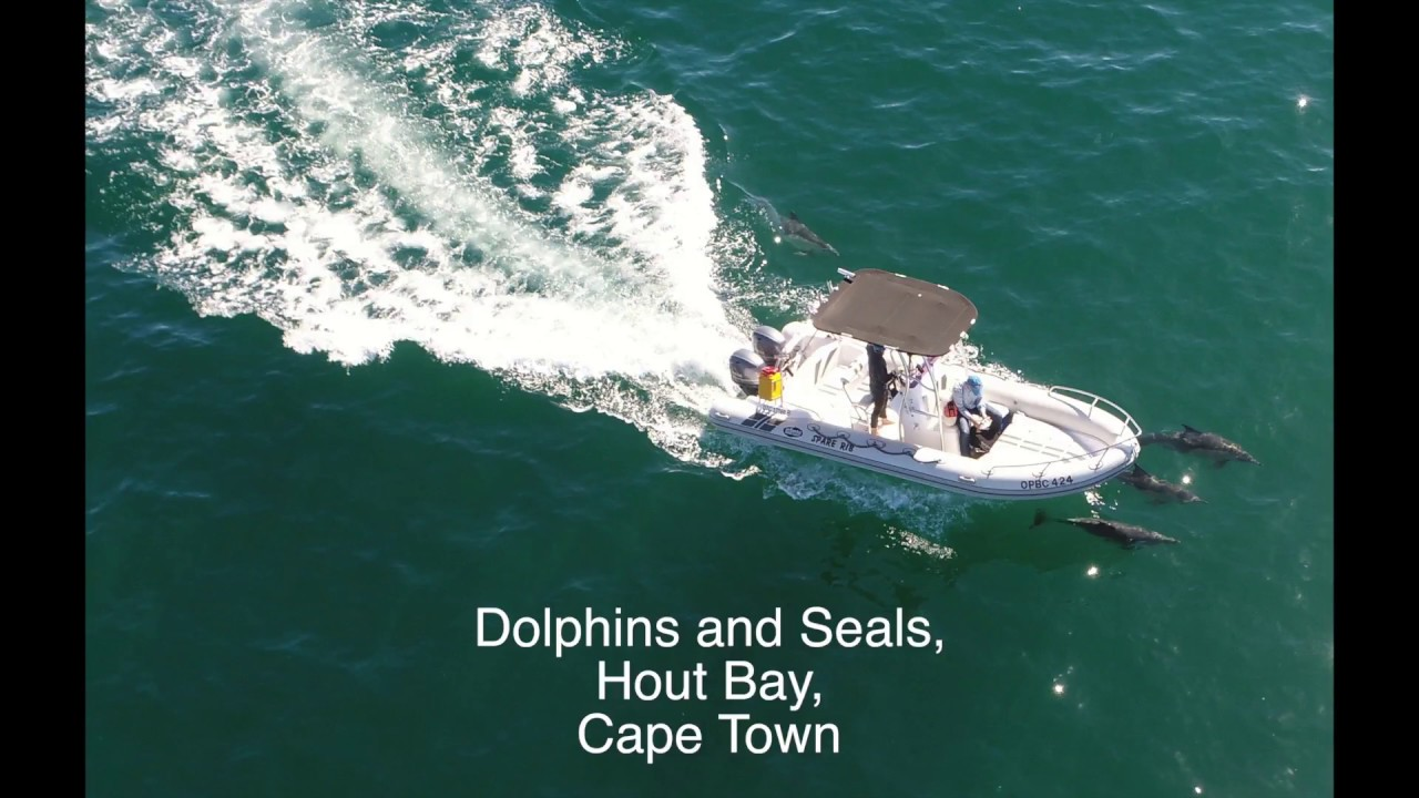 Mega pod of dolphins - photo#20