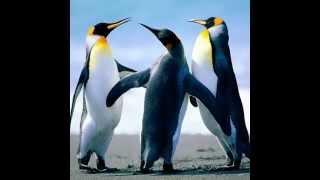 pingwen