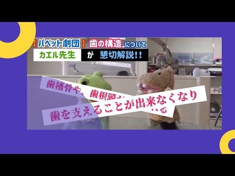 【パペット劇団】歯の構造についてカエル先生が懇切解説!!
