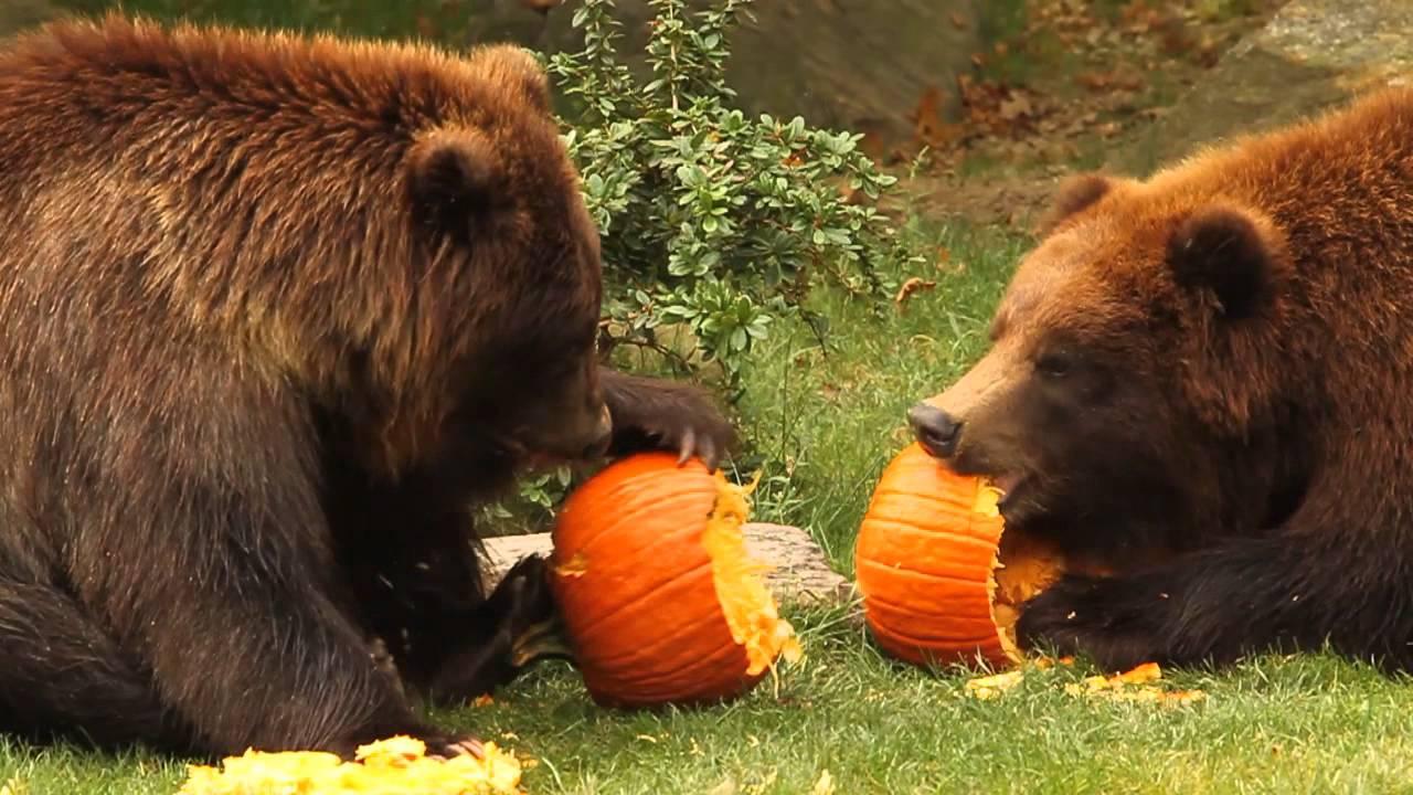 halloween i zoo
