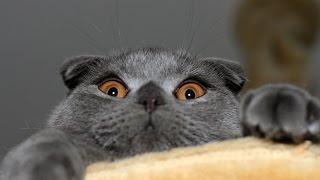 Приколы с кошками №3