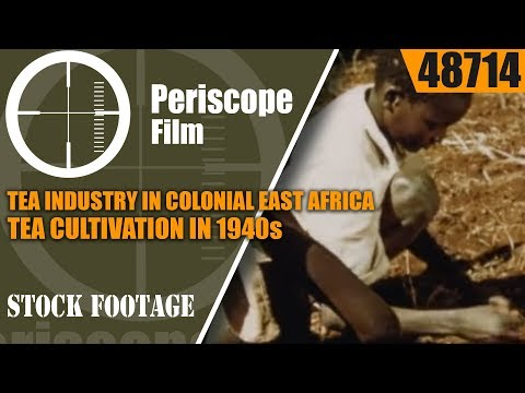TEA INDUSTRY IN COLONIAL EAST AFRICA  TEA CULTIVATION IN 1940s  48714