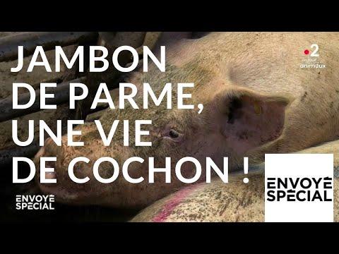 Envoyé spécial. Jambon de Parme,  une vie de cochon ! - 4 oc