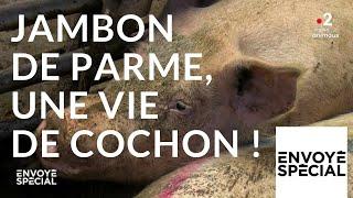 Envoyé spécial. Jambon de Parme,  une vie de cochon ! - 4 octobre 2018 (France 2)