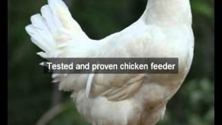 Chicken Feeders | Sierra | CA | automatic chicken feeder | feeding chickens | poultry feeders | hens