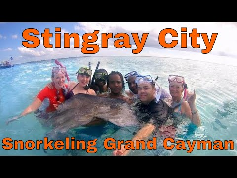 Stingray City in Grand Cayman, Carnival Cruise Sea Safari Part 2