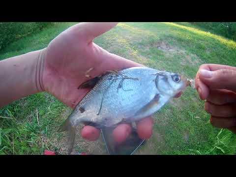 Рыбалка Делаем из спиннинга фидер и ловим леща , густеру, окуня.