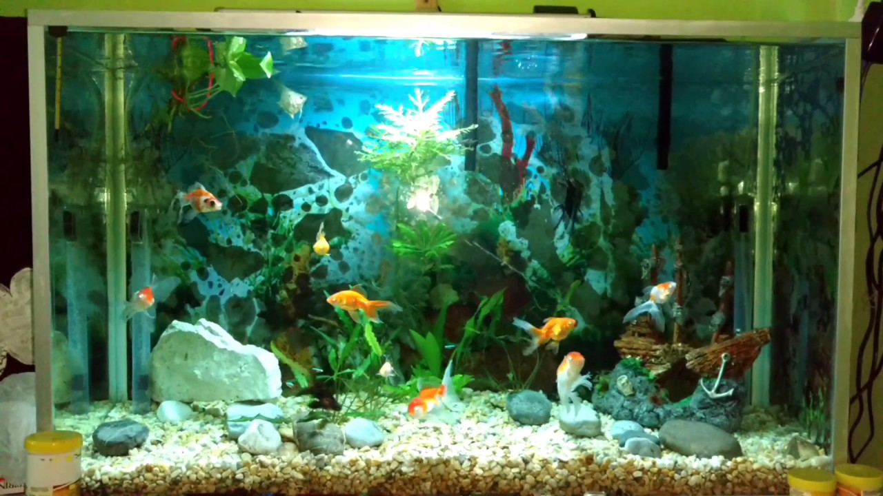 Grandes acuarios con peces pictures to pin on pinterest for Acuarios grandes